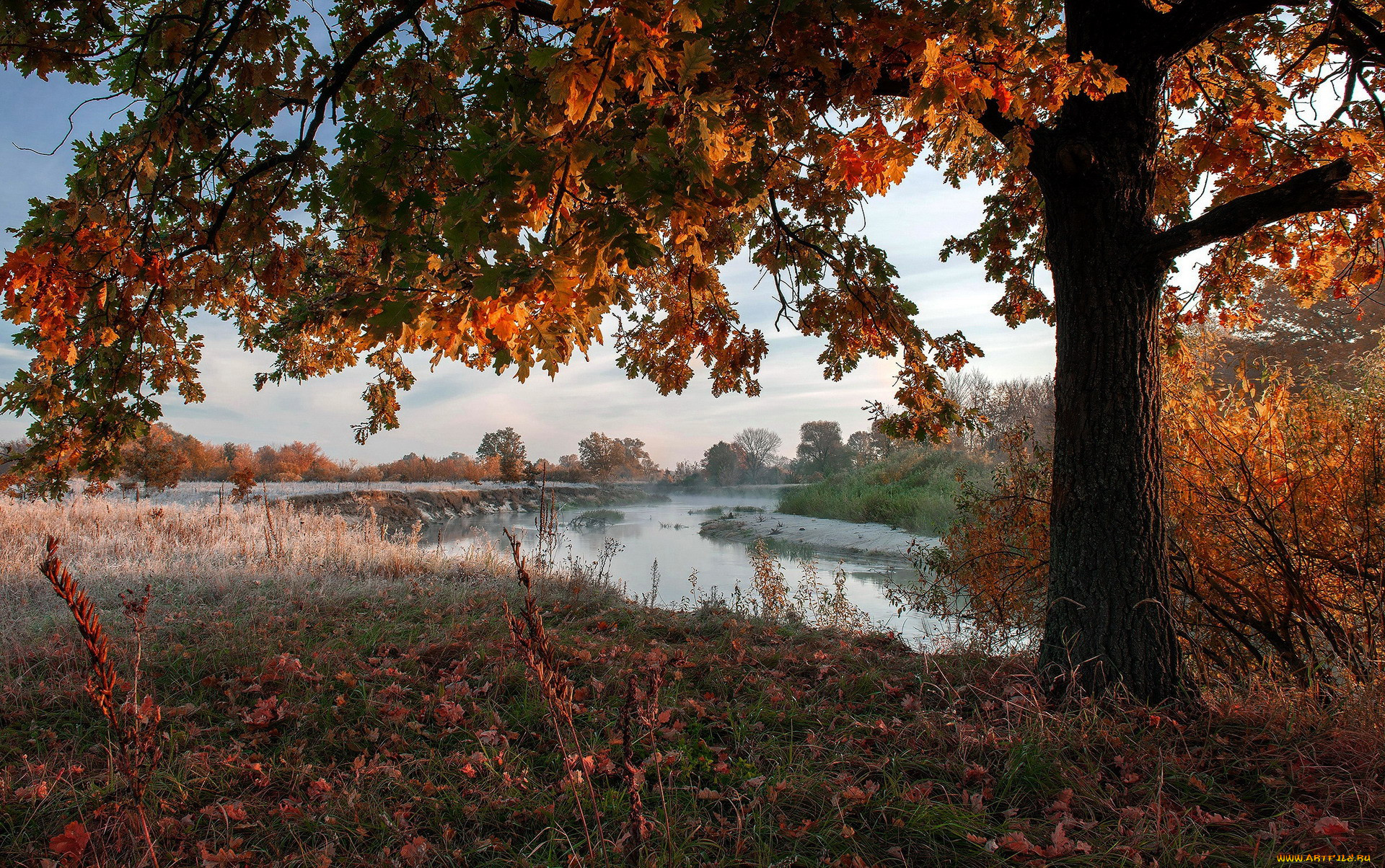 природа, реки, озера, осень, река, туман